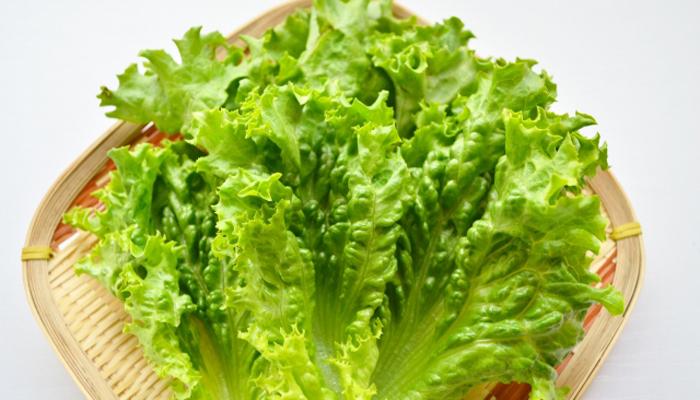 レタスの栄養とカロリー