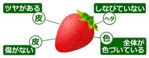 美味しいイチゴの見分け方