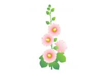 立葵(タチアオイ)
