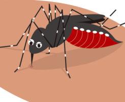 蚊に狙われやすい人